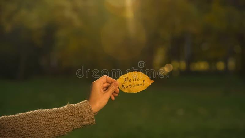 Hello höst som är skriftlig på det gula bladet, hand som rymmer handstilar, ljus guld- säsong royaltyfri bild