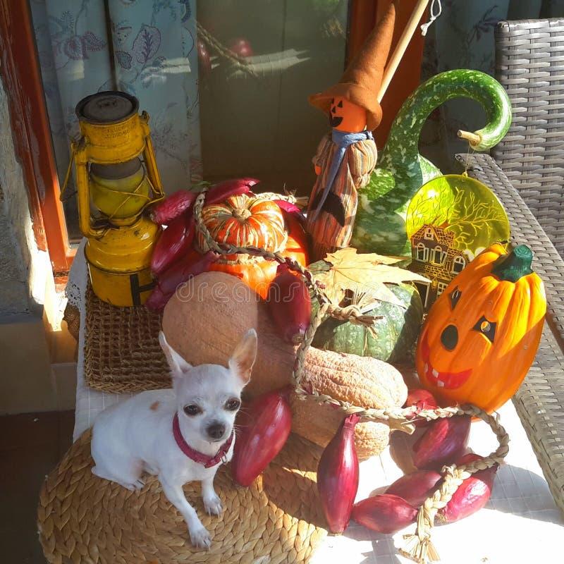 Hello, Halloween royalty-vrije stock afbeelding