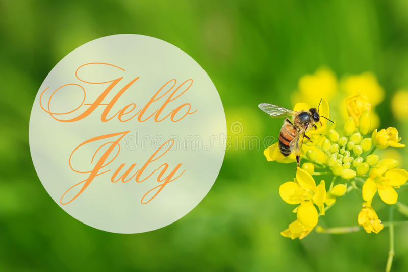 Download Hello July Greeting Card With Summer Background Stock Image    Image Of Bloom, Colourful