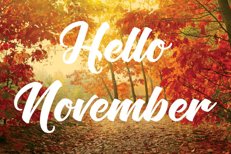 Hello November. Text `Hello November` superposed in white letters on bright Autumnal trees with orange and yellow leaves royalty free stock photos
