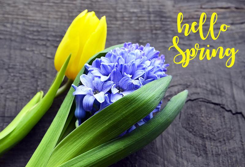 Hello Spring.Blue hyacinth and yellow tulip on old wooden background.First spring flowers. stock images