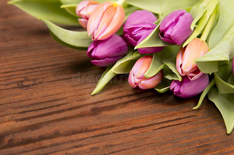Hello spring, colored flower royalty free stock photos