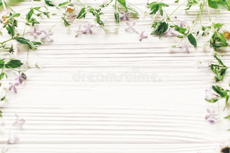 Hello spring flat lay. fresh daisy lilac flowers and green herbs. Frame on white wooden rustic background top view. greeting card. space for text. mock-up royalty free stock image