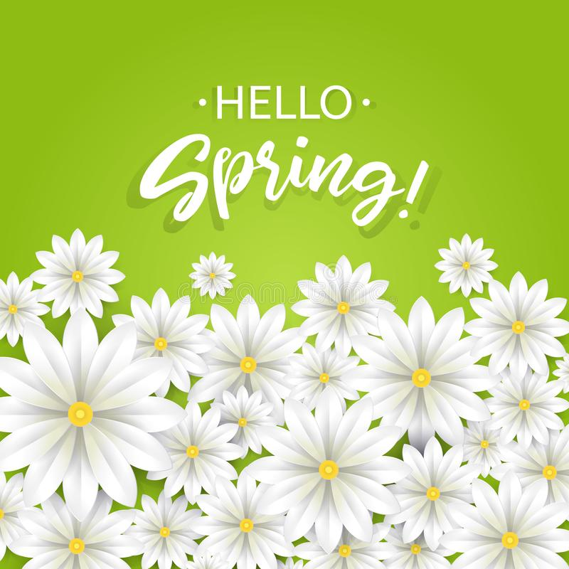 Hello Spring.Hand lettering with white flowers border.Paper chamomile on green background. Vector illustration. royalty free illustration