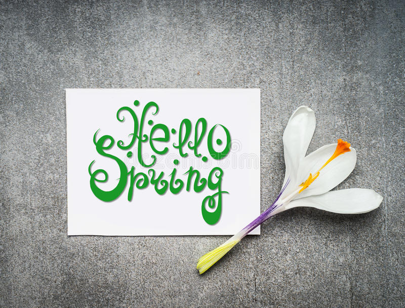 Hello spring lettering , springtime greeting card with white crocus flowers stock image