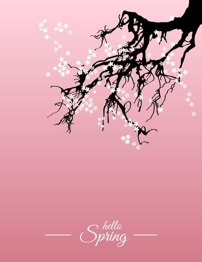 Download Hello Spring Sakura Greeting Card. Vector Stock Illustration    Illustration Of Illustration, Cherry