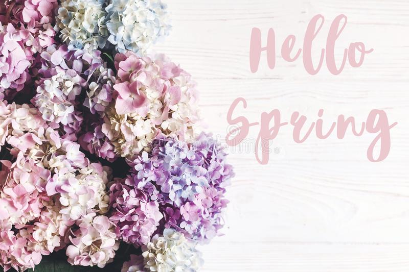 Hello Spring text sign at beautiful hydrangea flowers on rustic white wood, flat lay. Colorful border of hydrangea. Stylish floral. Greeting card stock photography