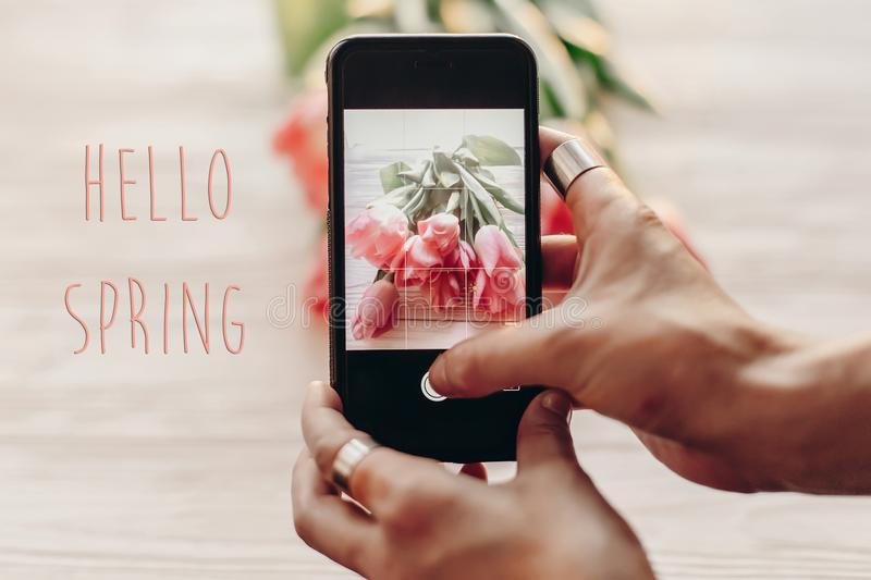 Hello spring text sign, hand holding phone taking photo of styli. Sh flower flat lay, pink tulips on white wooden rustic background. instagram blogging concept royalty free stock image