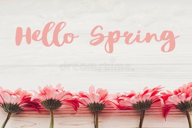 Hello Spring text sign on pink gerbera on white wooden background, flat lay . Stylish floral greeting card royalty free stock photography