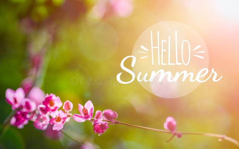 Hello summer background concept. Banner holiday flowers background. Beautiful pink flower on green nature background stock illustration