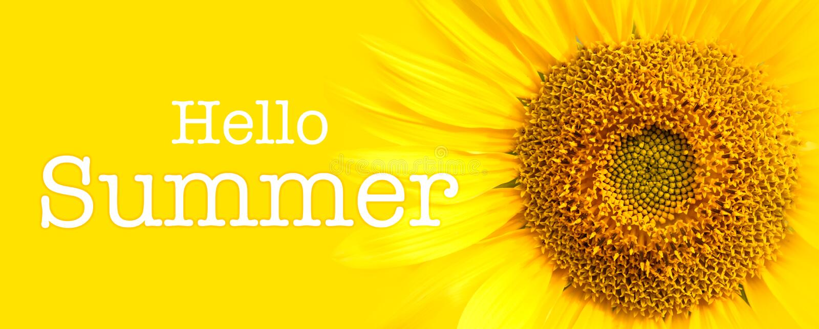 Hello Summer text and sunflower close-up details in yellow banner background stock images