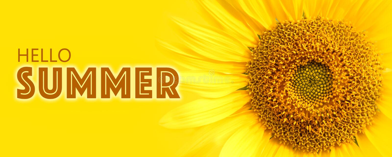 Hello Summer text and sunflower close-up details on yellow banner background macro photo. royalty free stock photography