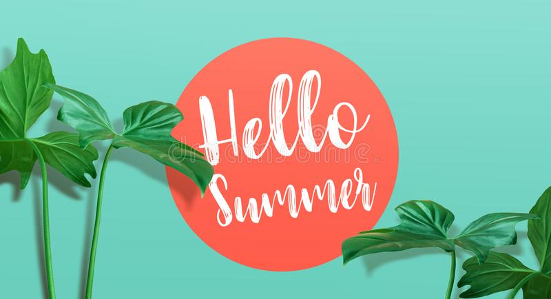 Hello summer text with tropical leaf on color background.summer stock photo