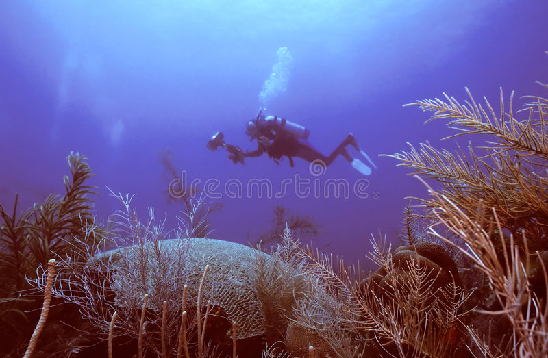 Download Hello there stock photo. Image of environment, coral, soft - 109258