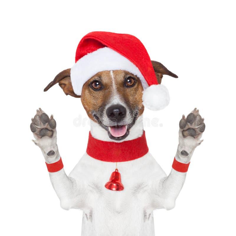 Hello vaarwel Kerstmishond royalty-vrije stock foto