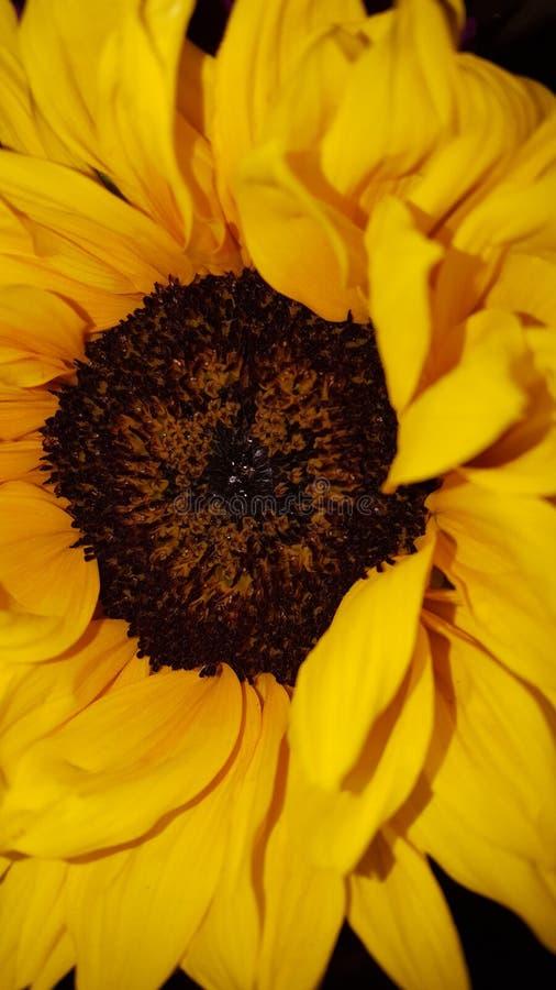 Hello-zonneschijn royalty-vrije stock afbeelding