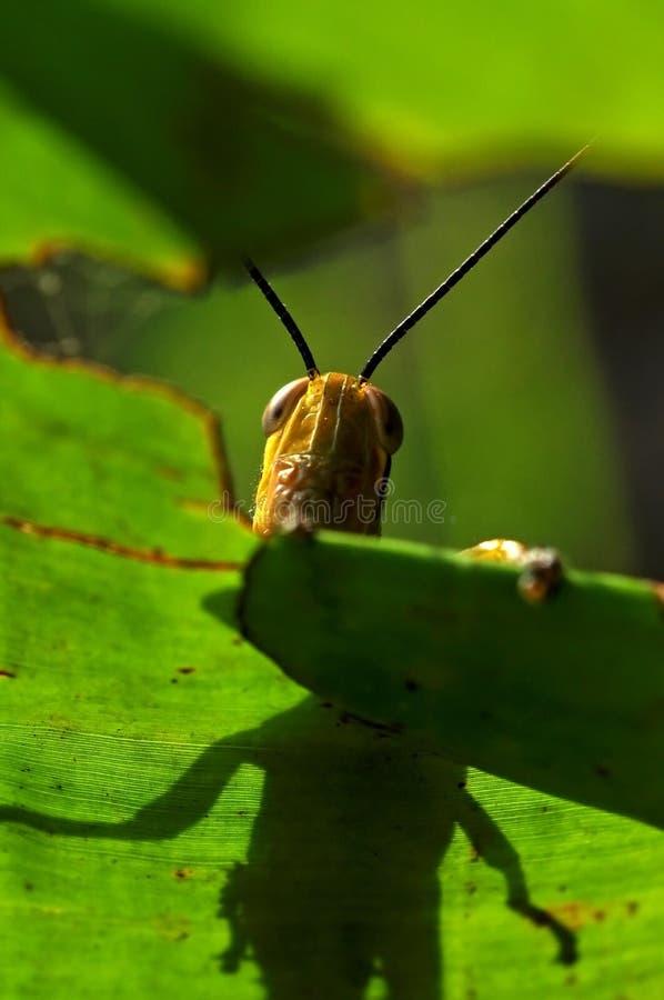 Download Helloo stock image. Image of animal, daylight, wildlife - 39248009