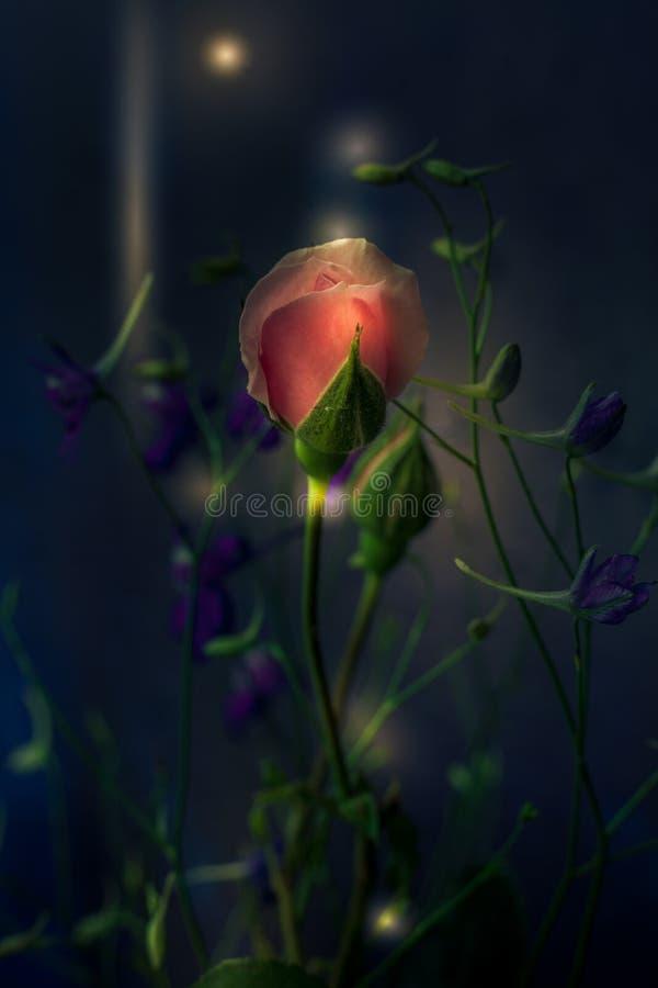 Hellrosa Rose der Fantasie und wilde Blumen auf dunklem Hintergrundmakro lizenzfreie stockfotografie