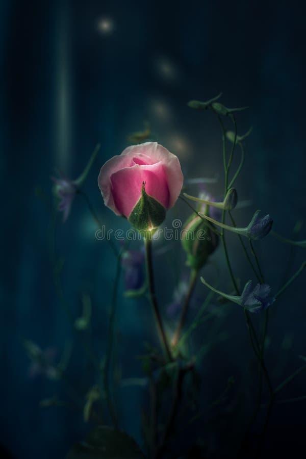 Hellrosa Rose der Fantasie und wilde Blumen auf dunklem Hintergrundmakro stockbild