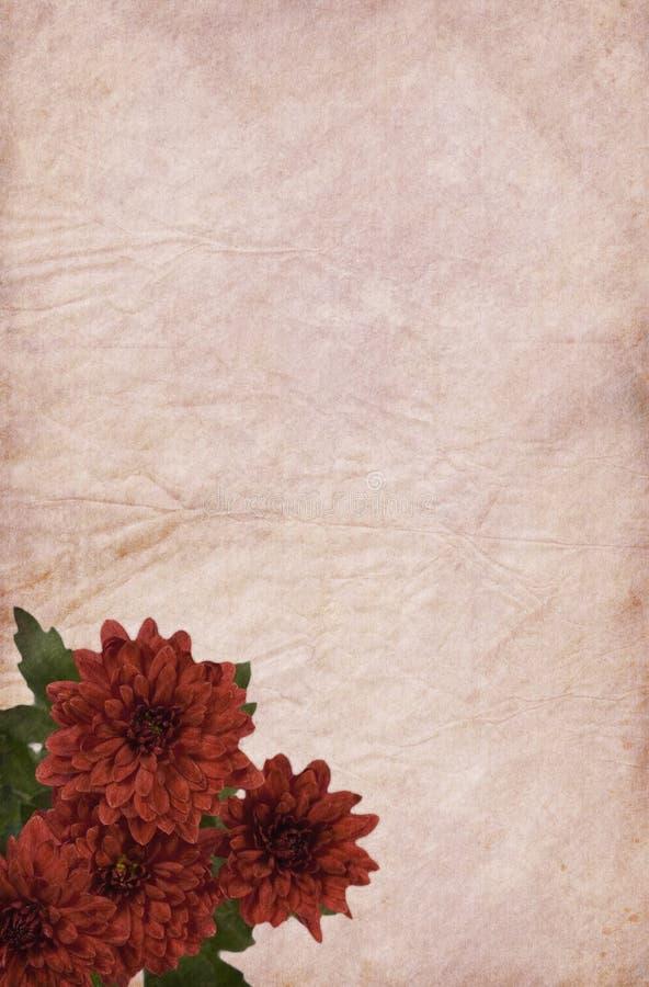 Hellrotes Papier und Chrysantheme stockfoto