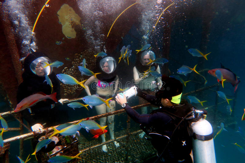 Helmet Diving in the Great Barrier Reef Queensland Australia royalty free stock photo