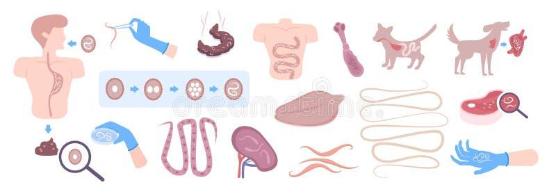 helmint parazita