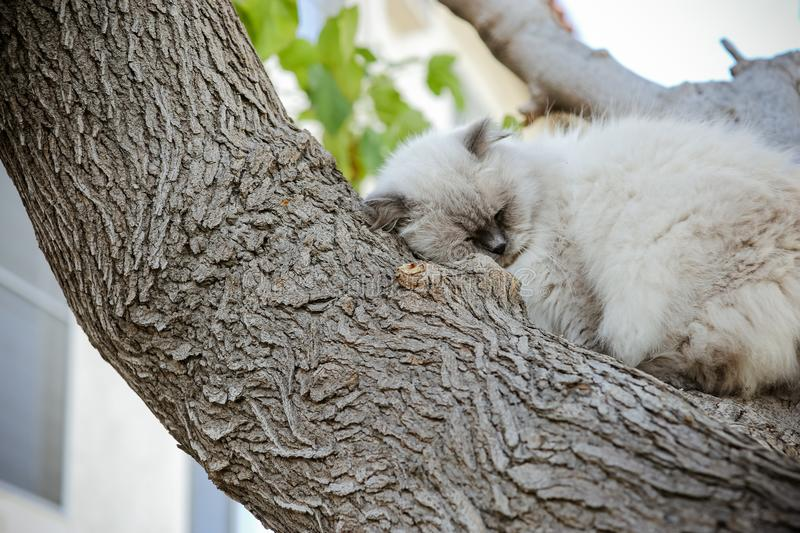 Homeless feral cat roll up on tree. Street persian Himalayan male kitten. royalty free stock photos