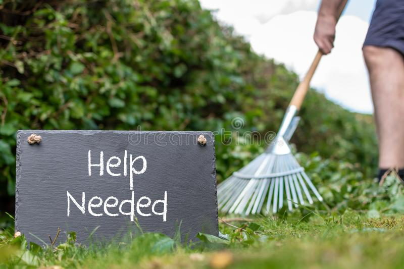 Help wanted in the garden. Man is raking leaves of a freshly cut hornbeam hedge. The words. `help needed` are written on a slate stock photos