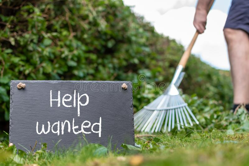 Help wanted in the garden. Man is raking leaves of a freshly cut hornbeam hedge. The words. `help wanted` are written on a slate stock photography