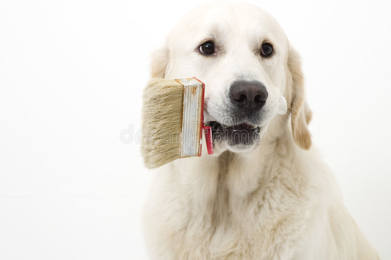 Helping dog royalty free stock photography