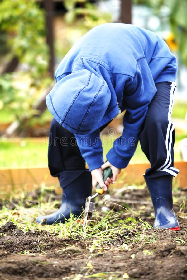 Helping in the garden royalty free stock image