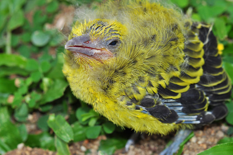Download Helpless Chick stock photo. Image of solitary, chick - 18574690