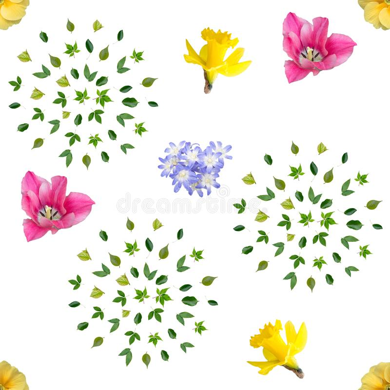 Spring flowers seamless background pattern. A helpless pattern of tender spring flowers: chelidox, narcissus, tulip, primula and green leaves for use as a royalty free stock photos