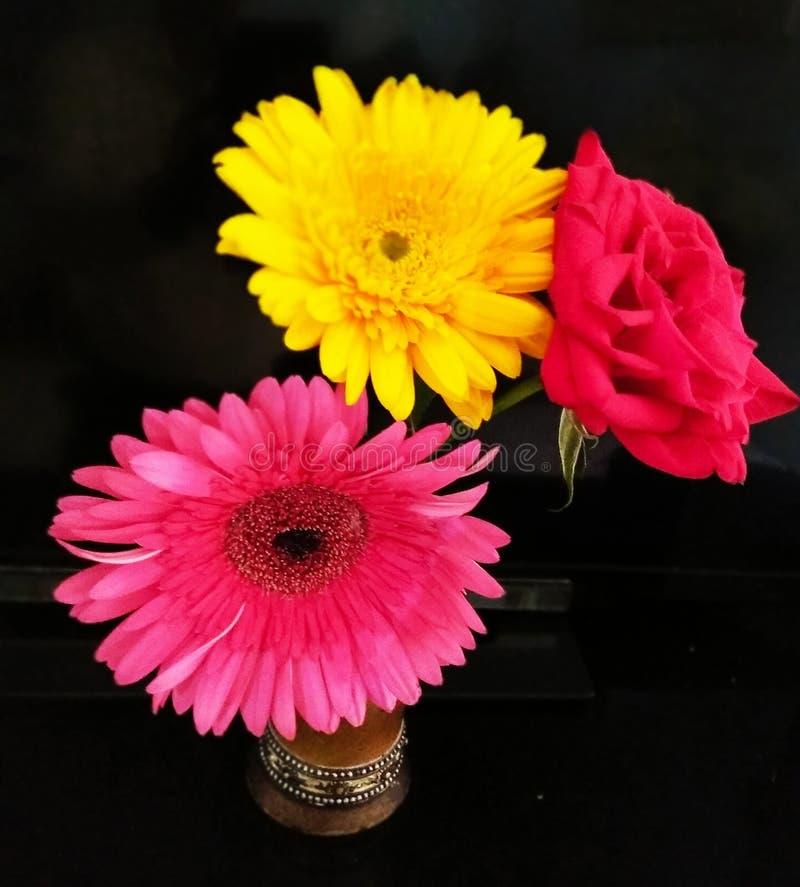 Helt blommande Gerbera och Rose blommor i en gryta i mörk bakgrund royaltyfri fotografi