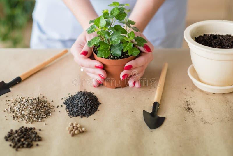 Hem- arbeta i trädgården växttransplantationblomkruka royaltyfria foton
