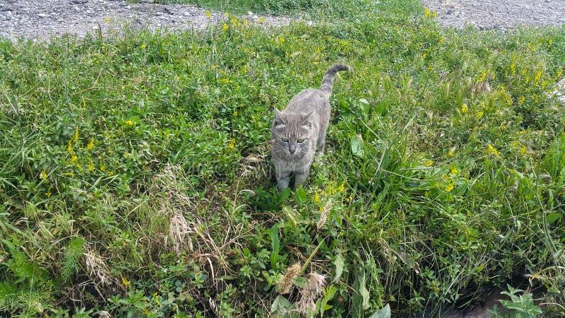 Hem- gulligt djur, liten grå kattunge i gräset fotografering för bildbyråer