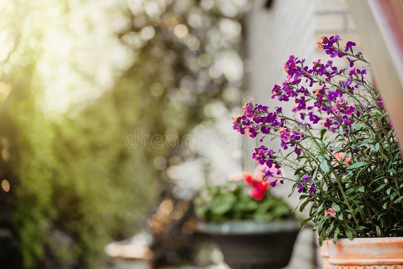 Hem- huvudsaklig ingång som dekoreras med växter och blommor royaltyfri foto