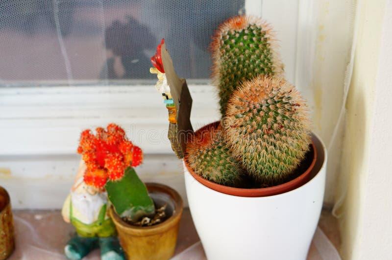 Hem- kaktus royaltyfria bilder