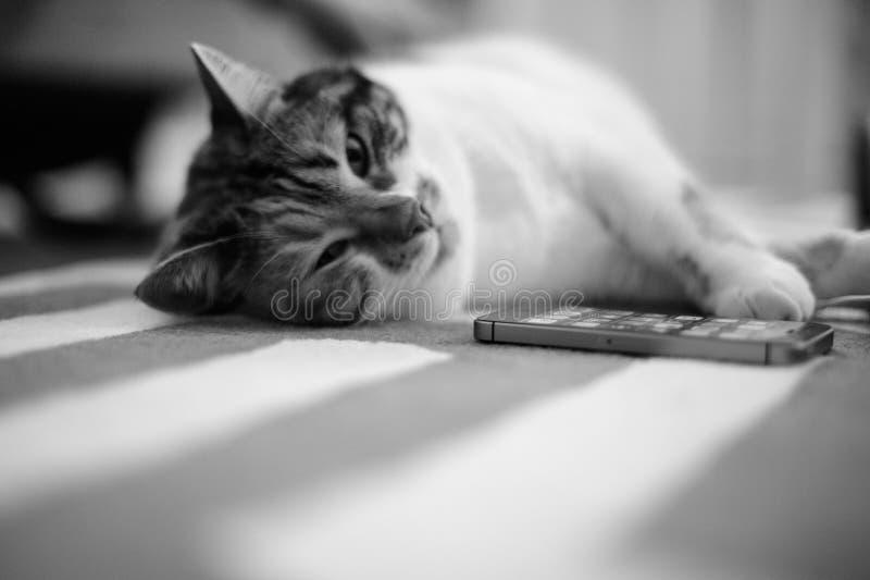Hem- matta med att sova för katt royaltyfri bild