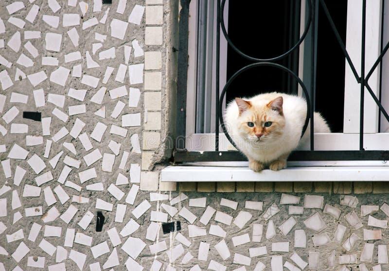 Hem- nyfiket kattsammanträde på en avsats som ut ser in i gatan royaltyfri foto