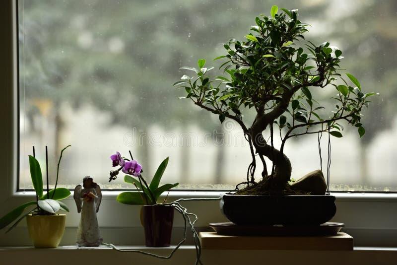 Hem- stilleben på fönstret arkivfoto