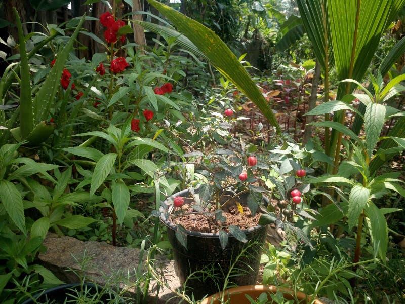 Hem- trädgård av växter & blomman arkivbilder
