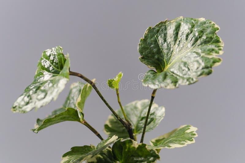 Hem- växt i en kruka Hem- blomma arkivbild