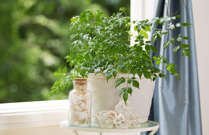 Hem- växt och garneringar framme av Open Windows på trevlig dag royaltyfri bild