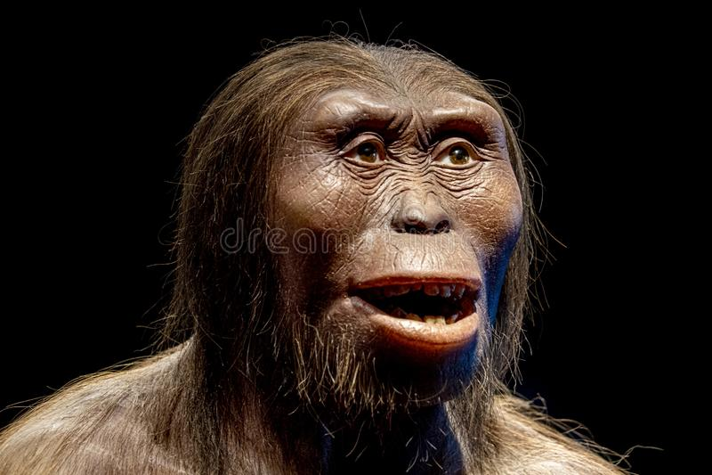 Hembra del Neanderthal de la CRO (coordinadora)-magnon de Lucy aislada en negro imágenes de archivo libres de regalías