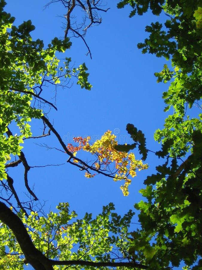 Hemel & bomen stock foto