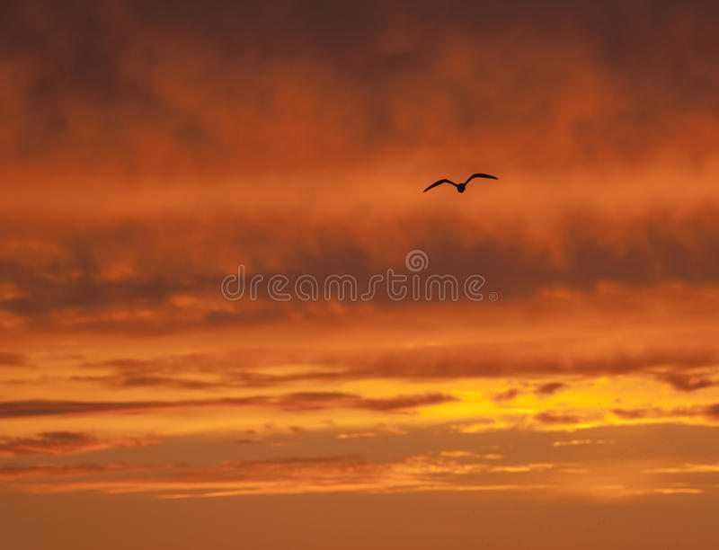 Hemel in Brand en één vogel royalty-vrije stock foto's