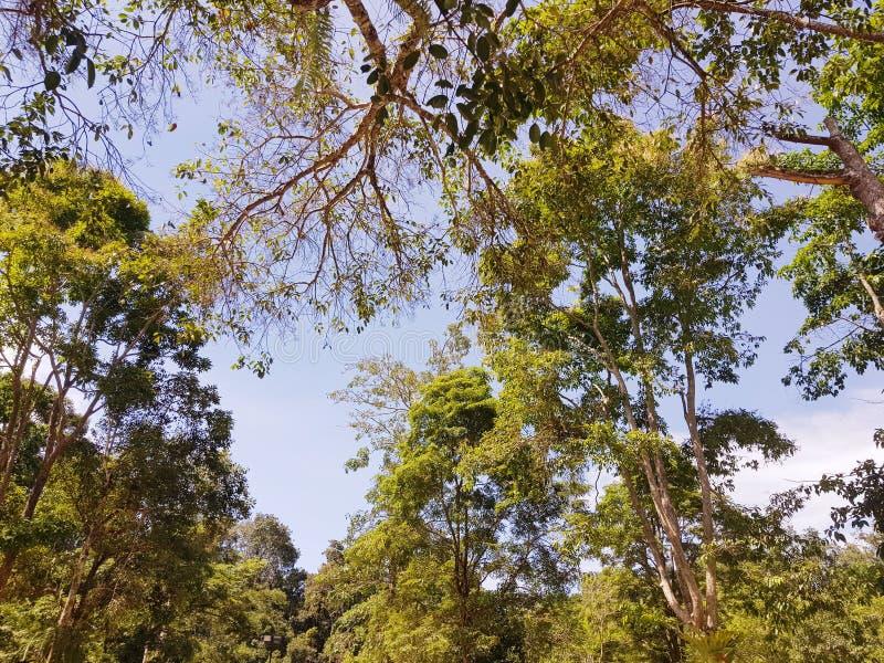 Hemel en grote bomen in het bos royalty-vrije stock afbeeldingen
