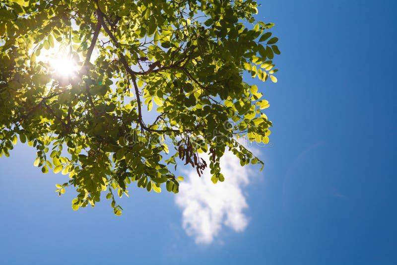 Hemel en zon in de bomen stock foto