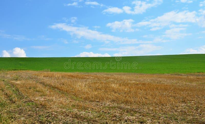 Hemel, gras, gebied stock afbeelding
